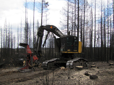 A feller Buncher sits in front of brunt trees near Escudilla Mountain.