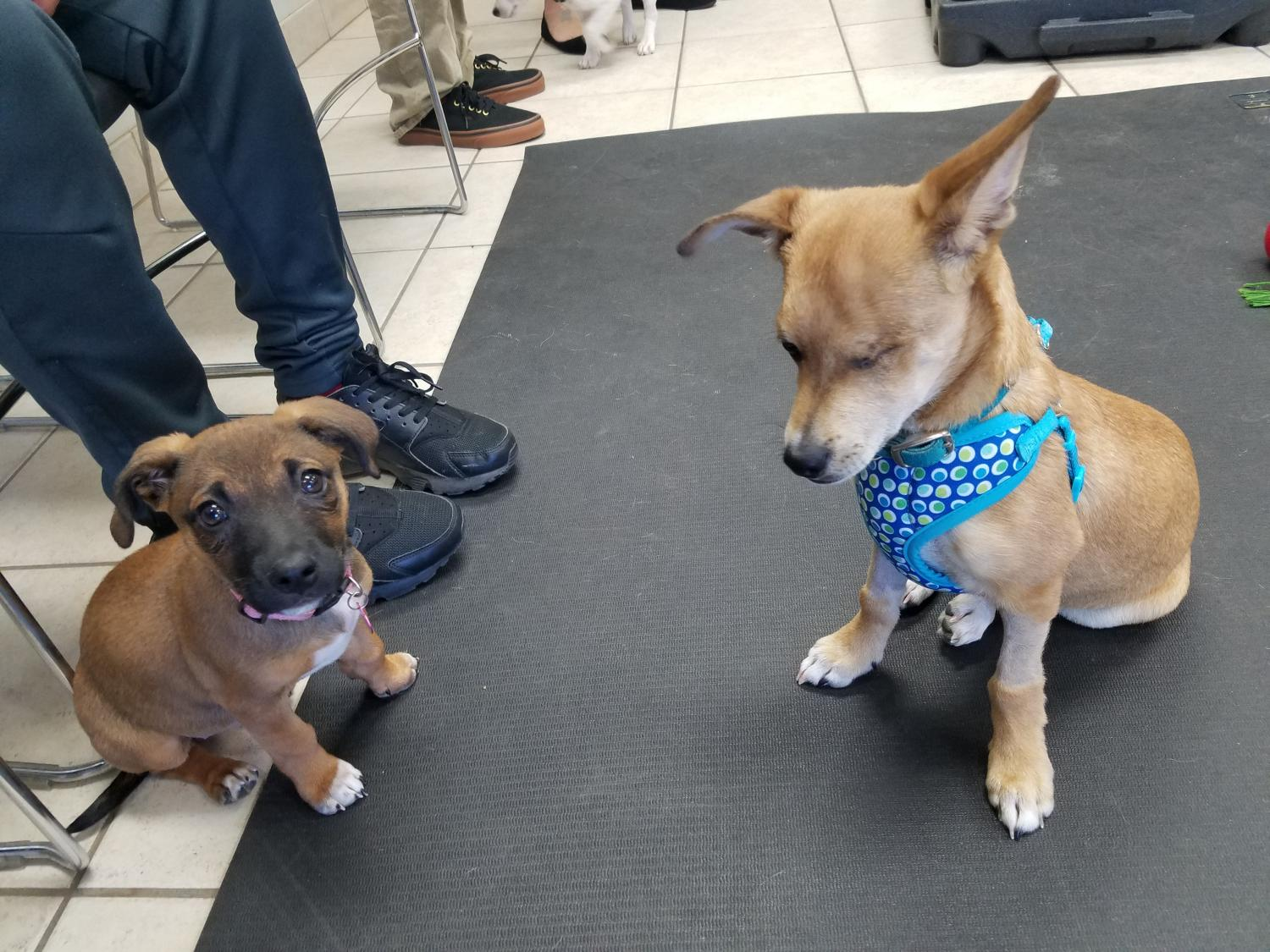 two puppies at puppy party