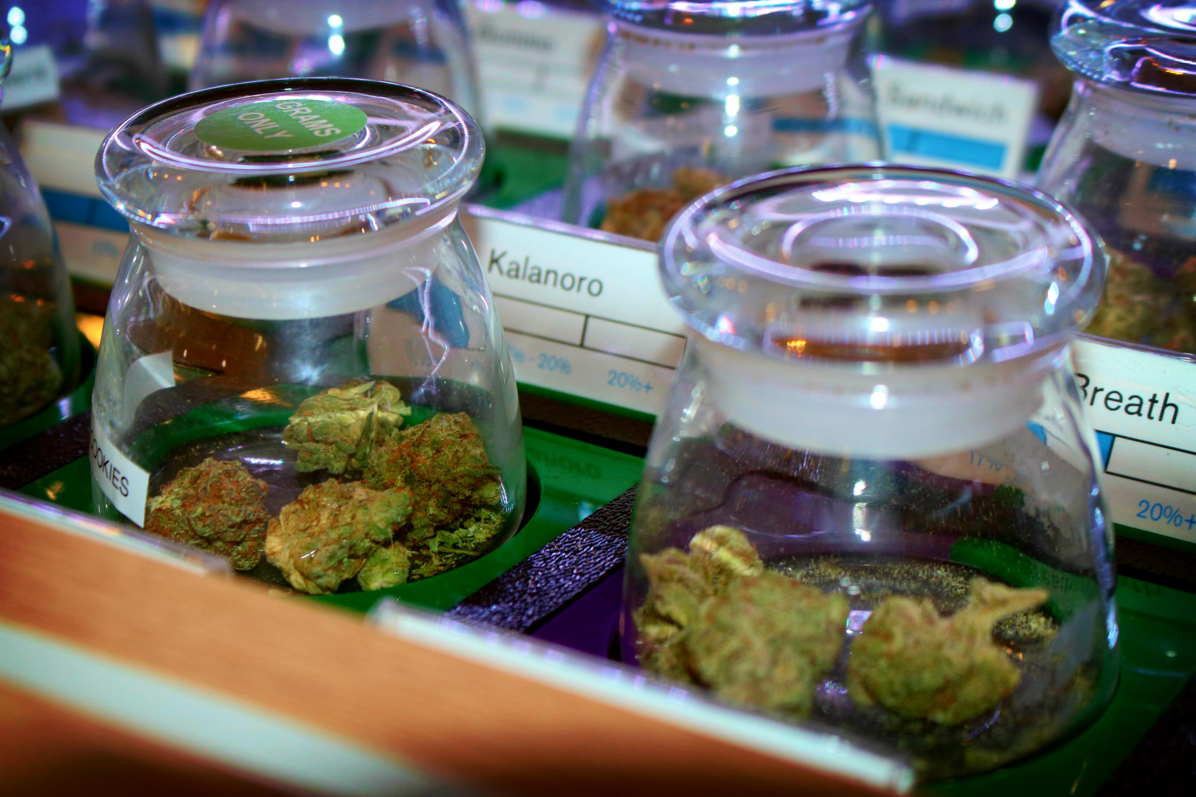 medical marijuana buds in glass jars