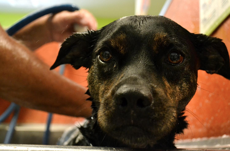 dog wash lab