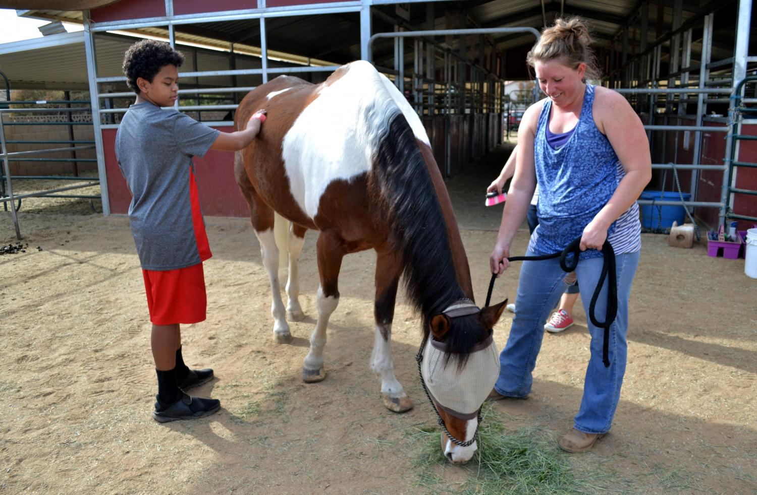 horse grooming with brush