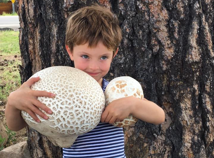 Giant Puffball Mushrooms