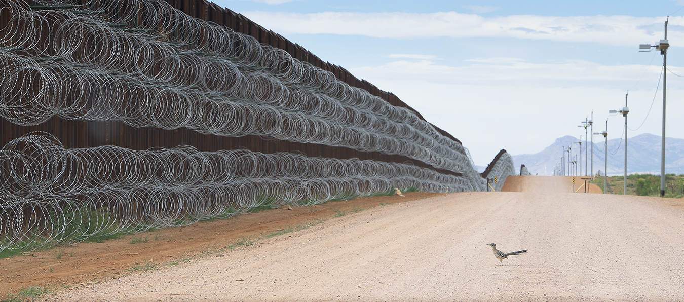 The story behind the photo of a lone roadrunner staring at the U.S.-Mexico border wall