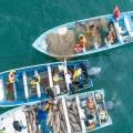 Poachers Swarm Vaquita Refuge 'Like Never Before'