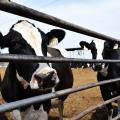 FSA Urges Dairy To Apply For Subsidy Program