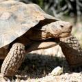 Dont take the tortoises