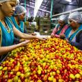 Tomato Imports Still Up After Duties Were Imposed