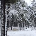 Snow in Flagstaff, Arizona.