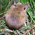 Threat of Lawsuit To Protect Western Jumping Mouse