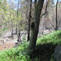 Cellular Dead Zone Caused Delay In Slide Fire Response