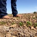 Salty Soil Hurting New Mexico