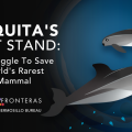 The Struggle To Save Vaquitas, The World