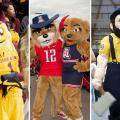 Untold Arizona: Arizona University Mascots A Century In The Making