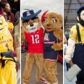 Untold Arizona: Arizona University Mascots A Century In The Making