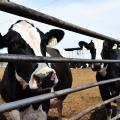 Bill Would Let Arizona Dairies Access Foreign Guest Workers