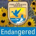 Endangered Species Act logo
