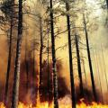 AZ Firefighters In California See Similarities To Slide Fire