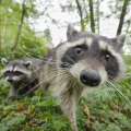 Wildlife Photographer In Valley To Talk About His Work