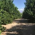 Water Restrictions, Hot Temperatures Squeeze Arizona