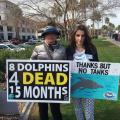 Backlash Continues After 4th  Dolphin Dies At Dolphinaris