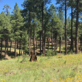 AZ Groups Partner To Put New Tech Into Thinning Forests