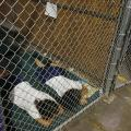 Attorneys Concerned About Legal Access For Migrant Kids