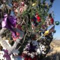 Did You Know: I-17 Tree Mysteriously Decorated Every Year
