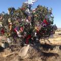 Brush Fire Threatens I-17s Mystery Christmas Tree