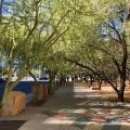 Phoenix Residents Working To Implement Tree And Shade Master Plan