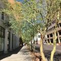 Would You Pay Extra $10 Tax For More Trees In Phoenix?