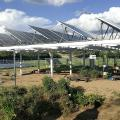How Agrivoltaics Could Create Sustainable Crops