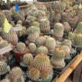 Cacti Collection Brought From New Jersey To Desert Botanical Garden