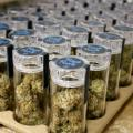 Scientists Push For Expanded Research Into Cannabis