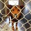 County Pursuing Plans For New East Valley Animal Shelter