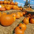 Sounds Of The City: It Feels Like Fall At The Pumpkin Patch
