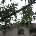 rain on a tree during a monsoon