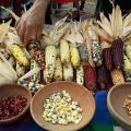 Genetic Data Inspires Rethinking Of Corn Domestication