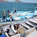 Fishermen Return To Sea Of Cortez In Banned Vaquita Area