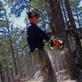 Forest Thinning Helped Contain Slide Fire