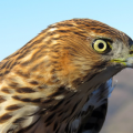 Climate Change Is Decimating Bird Populations in the Mojave Desert