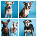 Arizona Humane Society Waives Dog Adoption Fees In October