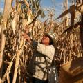 Shot Across The Bow: Mexico Considers Boycott Of U.S. Corn