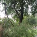 Monsoon storm damage