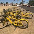 Ofo bikes
