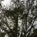 Phoenix Residents Demand Action On Tree Shade Plan