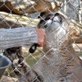Wildlife Conservation Center Sustains Storm Damage