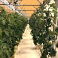Nanotech Company Pairs With UA To Grow Space Plants
