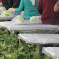 Farmworker Wage Lawsuit Results In $2.2M Settlement