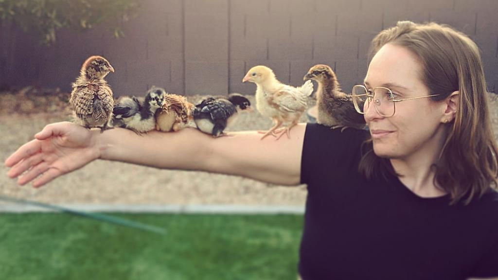 Katie Campbell's Supreme Coop chickens