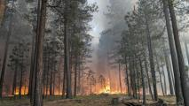 Arizona Wildfires: What To Expect In 2020